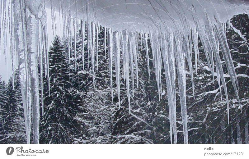 Eiszapfen Winter kalt Schnee
