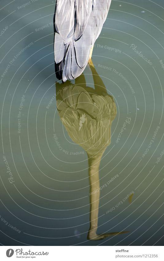 Tierisch gut: herrehieR schön Wasser außergewöhnlich See Vogel Reiher