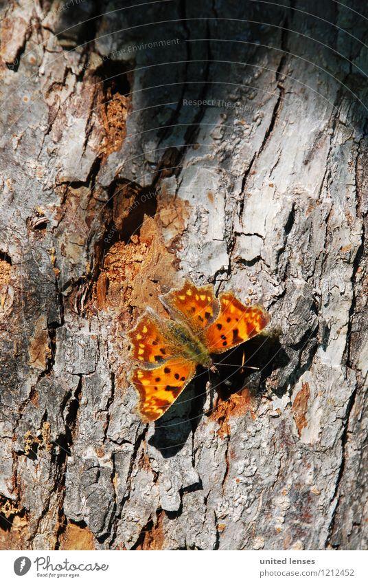 DR# Schmetterling Kunst Umwelt Natur ästhetisch Zufriedenheit Baumstamm Baumrinde Insekt Umweltschutz Naturschutzgebiet braun fliegen Detailaufnahme