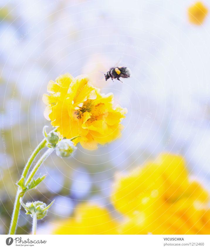 Gelbe Blume und Hummel Design Sommer Garten Natur Pflanze Tier Frühling Herbst Blatt Blüte Park Wiese Biene 1 fliegen gelb Hintergrundbild Pollen Unschärfe