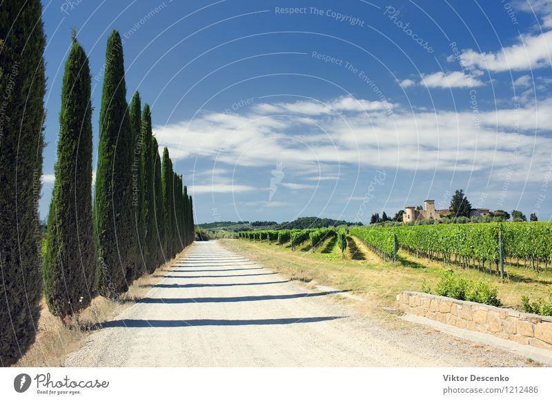 Typische Toskana-Landschaft mit Traubenfeldern Ferien & Urlaub & Reisen Sommer Haus Natur Himmel Gras grün Weinberg panoramisch Chianti Italien Panorama Weingut