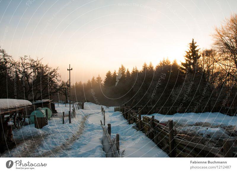 Ein neuer Tag bricht an Wolkenloser Himmel Sonnenaufgang Sonnenuntergang Sonnenlicht Winter Nebel Schnee Baum Holz Fährte Fußspur ästhetisch Idylle Natur Zaun