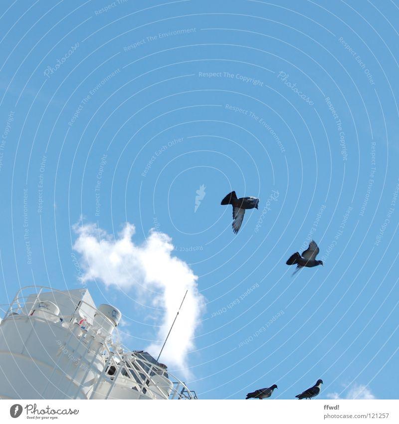 Taubenschlag Himmel blau Sommer Wolken Vogel fliegen Industrie Luftverkehr Flügel Abgas Wasserdampf Abheben Silo flattern Emission