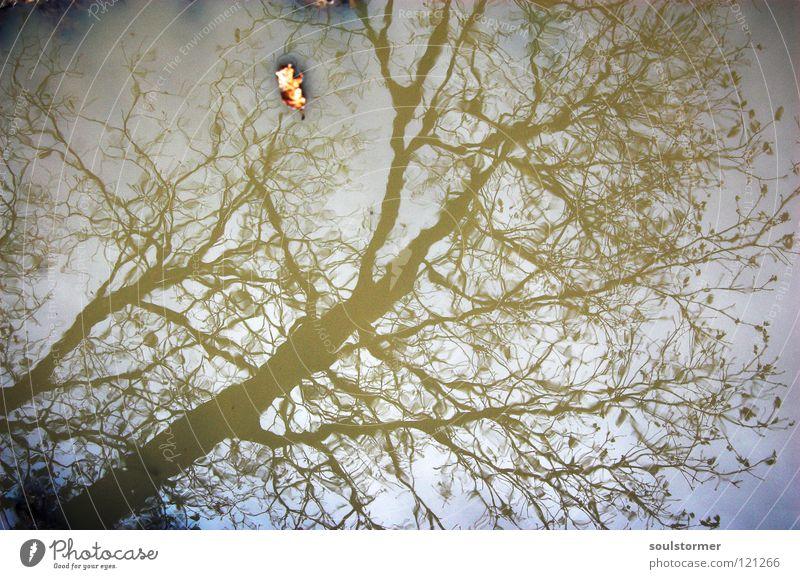 wie gemalt... Natur Wasser grün schön Baum Blatt schwarz ruhig Wald Erholung grau braun Wellen außergewöhnlich Wassertropfen streichen