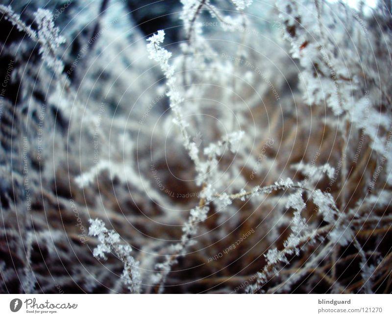 Tender Winter Schneekristall Eiskristall Lebensbaum grün kalt dunkel Makroaufnahme Baum erfrieren gefroren zart zerbrechlich unterkühlt fein weiß Dezember