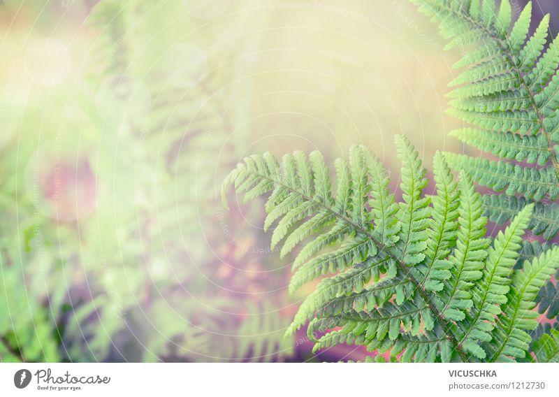 Farn Wald Natur Pflanze grün Sommer Blatt Ferne Wald Umwelt gelb Frühling Herbst Stil Hintergrundbild Garten Lifestyle Park