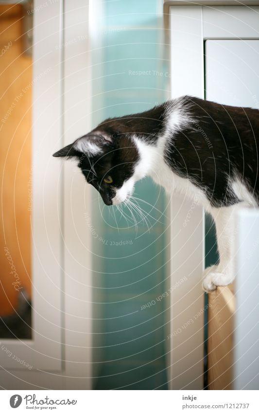 Katzenleben - erst hochklettern, dann runtergucken Lifestyle Freizeit & Hobby Häusliches Leben Bad Haustier 1 Tier Tierjunges beobachten Blick niedlich oben