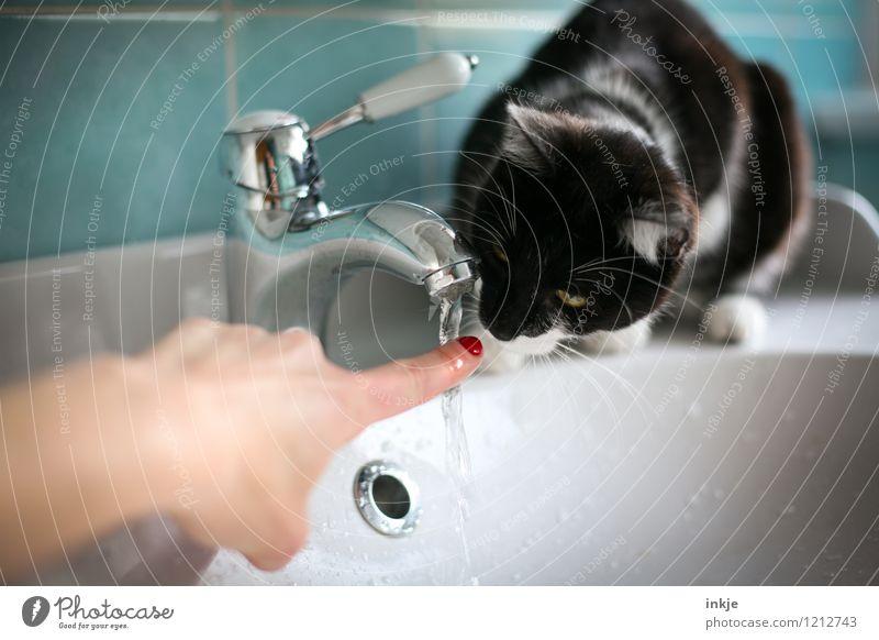 Katzenleben - schnüffeln Lifestyle Freude Freizeit & Hobby Häusliches Leben Bad Frau Erwachsene Finger 1 Mensch Haustier Tier Tierjunges Wasserhahn Waschtisch