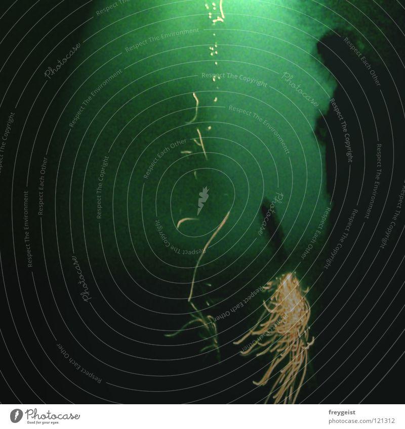 Green dunkel Brand fliegen Beginn Silvester u. Neujahr Feuerwerk brennen 2008 anzünden 2007 verraucht