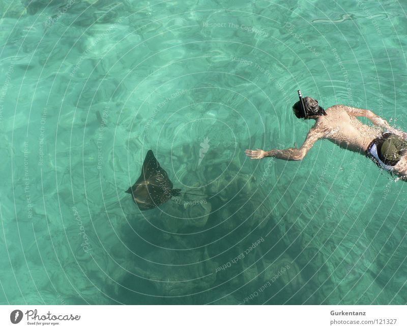 Rochenjagd Tauchgerät Adler Rochen Badehose tauchen Frieden Taucherbrille Wassersport Meer schnocheln semporna ray eagle ray Unterwasseraufnahme Jagd handzahm