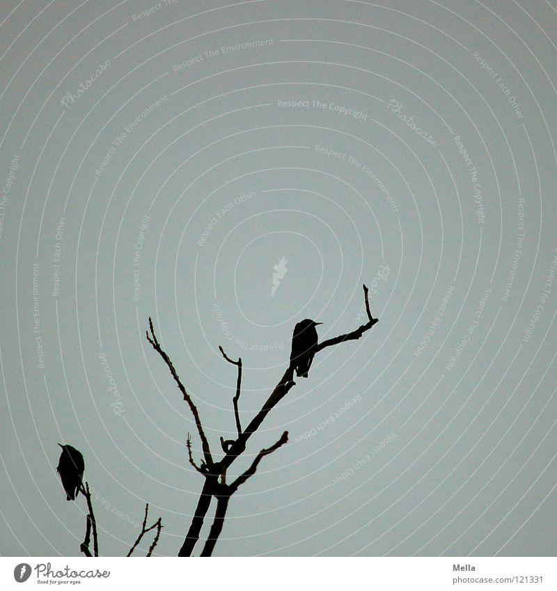 Sie warten Baum Winter schwarz dunkel kalt oben Tod grau Traurigkeit Vogel hoch sitzen leer Trauer bedrohlich