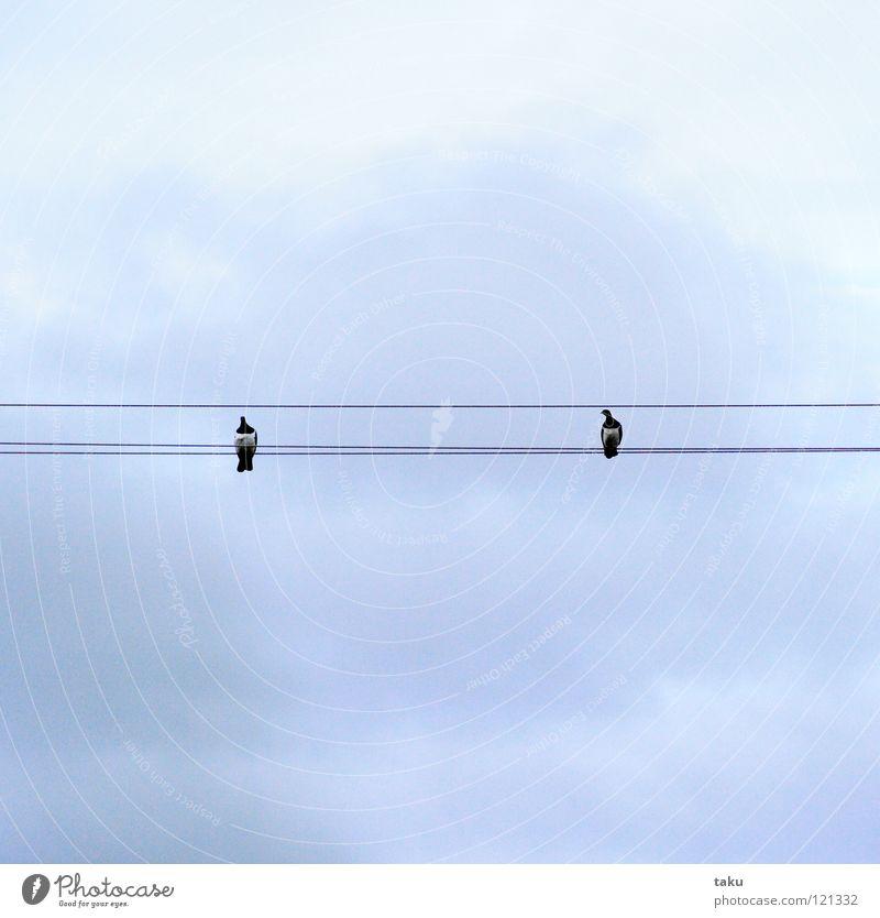 DISTANCE Himmel blau Freude Wolken Vogel Kabel Aussicht Lücke Nachmittag Neuseeland Besucher
