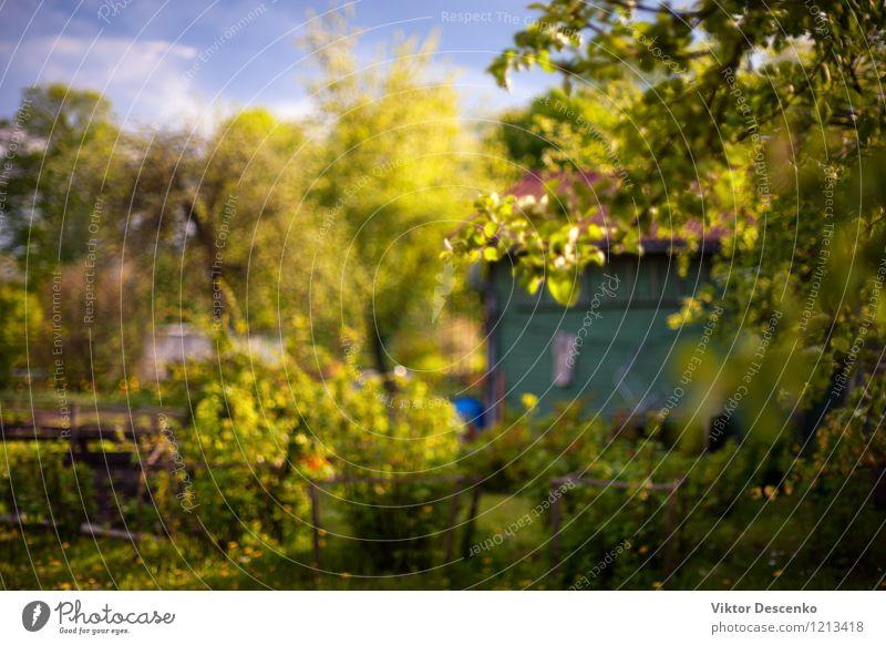 Blühender Garten mit Sommerhaus an einem sonnigen Frühlingstag. Verschwommen Natur Pflanze schön grün Farbe Sonne Baum Blume rot Haus gelb Architektur natürlich