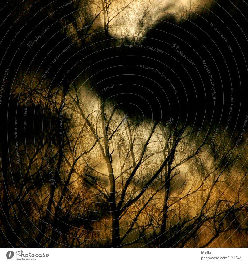 Nightmare Baum schwarz Wolken dunkel träumen Angst gruselig Geister u. Gespenster Surrealismus falsch Panik unheimlich Alptraum traumhaft beklemmend Mondschein