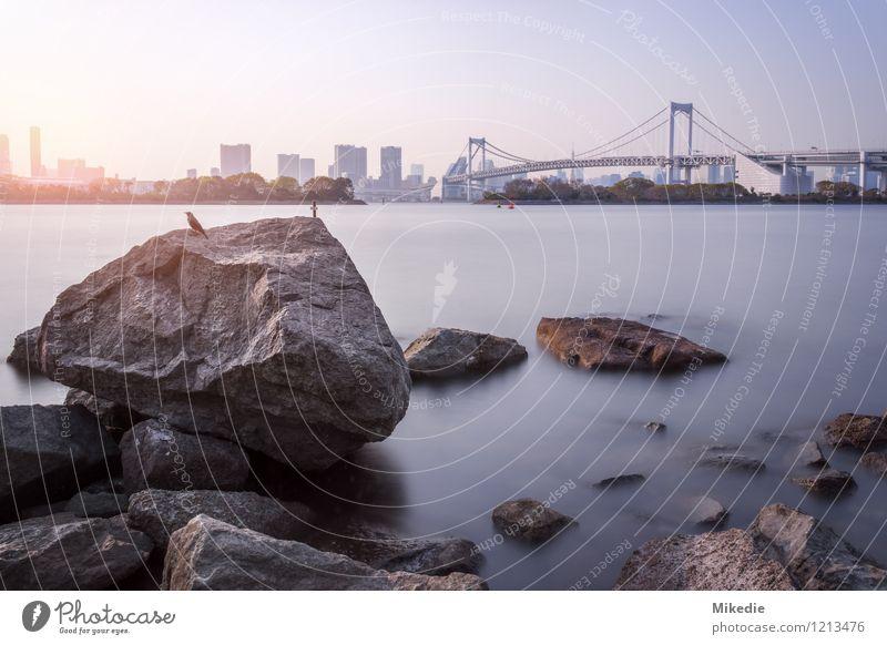Tokyo Bay Wasser Sonne Schönes Wetter Felsen Stadt Hauptstadt Hafenstadt Skyline Menschenleer Haus Hochhaus Brücke Bauwerk Gebäude Architektur Sehenswürdigkeit