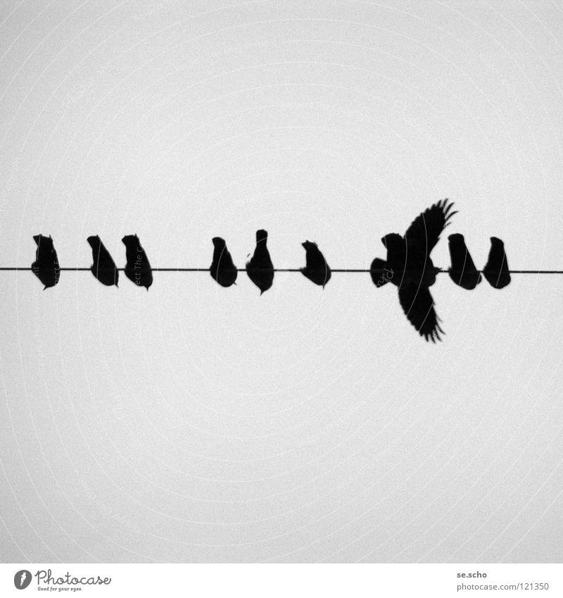 Abflug Ferien & Urlaub & Reisen grau Vogel Luftverkehr Kabel Flügel Leitung Abheben