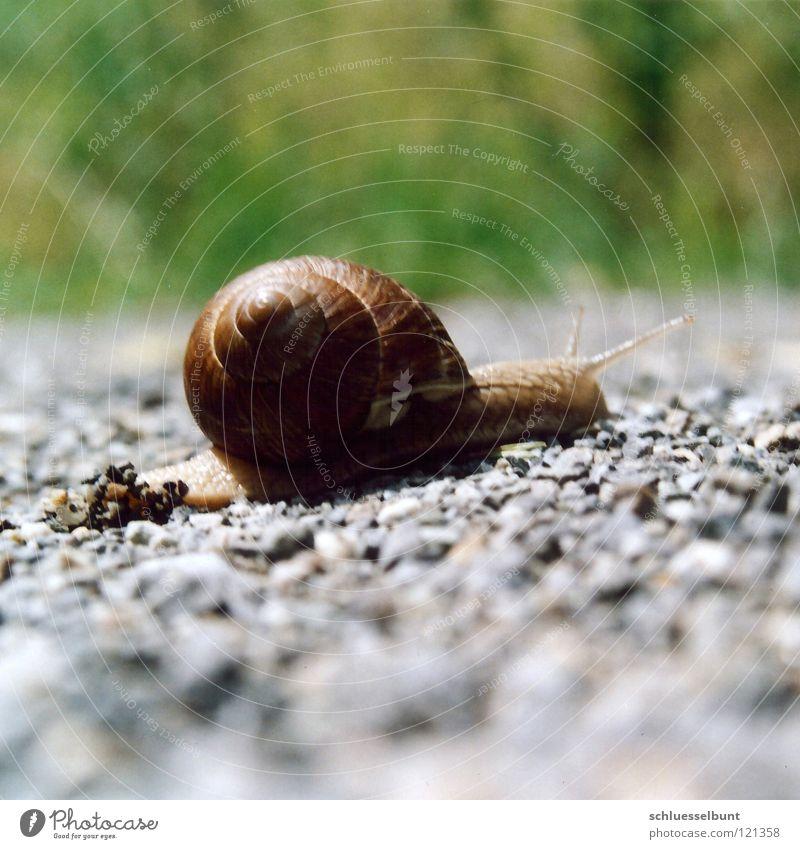 Weg grün Sommer Ferien & Urlaub & Reisen ruhig Straße Wiese Stein Wege & Pfade Konzentration Langeweile anstrengen Schnecke Kies Fühler krabbeln Ornament