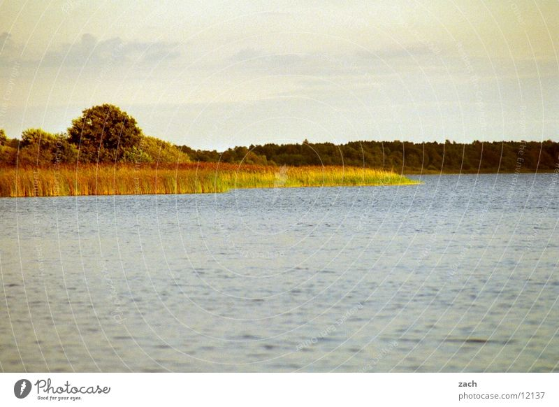 Abendsee Farbfoto Außenaufnahme Menschenleer Textfreiraum oben Textfreiraum unten Morgen Tag Licht Totale ruhig Natur Wasser Wolken Baum Schilf Küste Seeufer