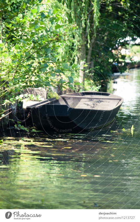 Spreewäldergurkenboot Natur Sommer Wasser Baum ruhig Freude schwarz Holz außergewöhnlich Deutschland Wasserfahrzeug genießen Ausflug Schönes Wetter einzigartig Dorf