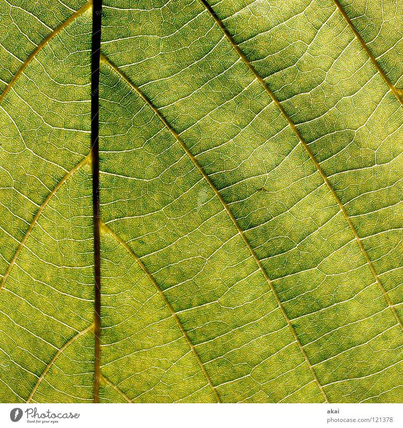 Das Blatt 27 Natur Baum grün Pflanze Blatt Leben Kraft Hintergrundbild Umwelt geschlossen Sträucher nah Ast Landwirtschaft Botanik Gefäße