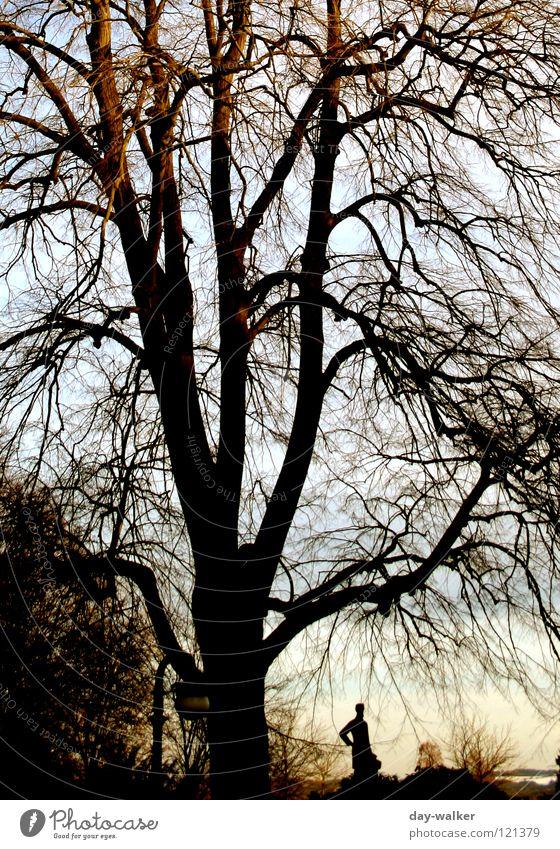 Zweisamkeit Mensch Natur Baum Sonne Winter dunkel Herbst hell Zusammensein Bank Ast Statue Baumstamm Abenddämmerung Geäst