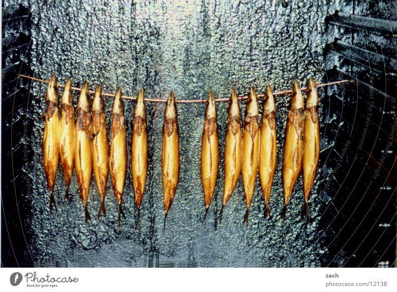 Es gibt vielleicht Fisch Tier Ernährung Tod Lebensmittel mehrere Fisch Appetit & Hunger lecker hängen Fischereiwirtschaft gleich Delikatesse geräuchert Totes Tier Räucherfisch