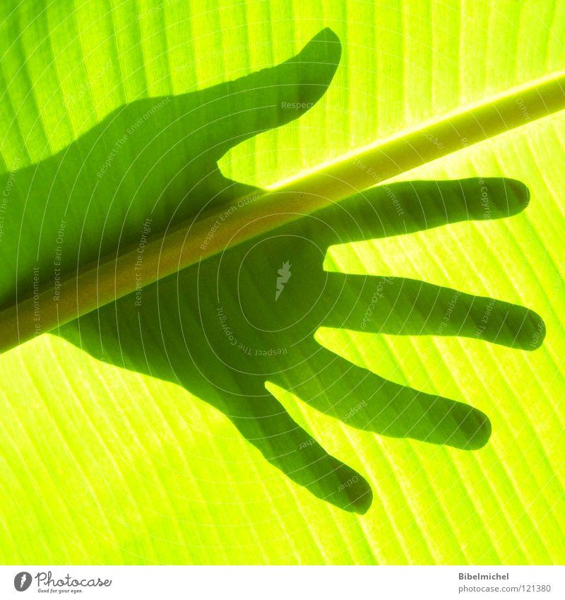Touch it! Hand Finger Daumen Licht Blatt Gefäße grün gelb schwarz Stil schön Baum Ringfinger Mittelfinger Zeigefinger Handballen Faser berühren Handfläche Palme