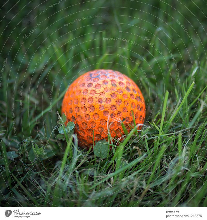 einlochen Freizeit & Hobby Spielen Park Freude Golfball sportlich Sportrasen rot grün Ball Farbfoto Nahaufnahme Makroaufnahme Muster Strukturen & Formen