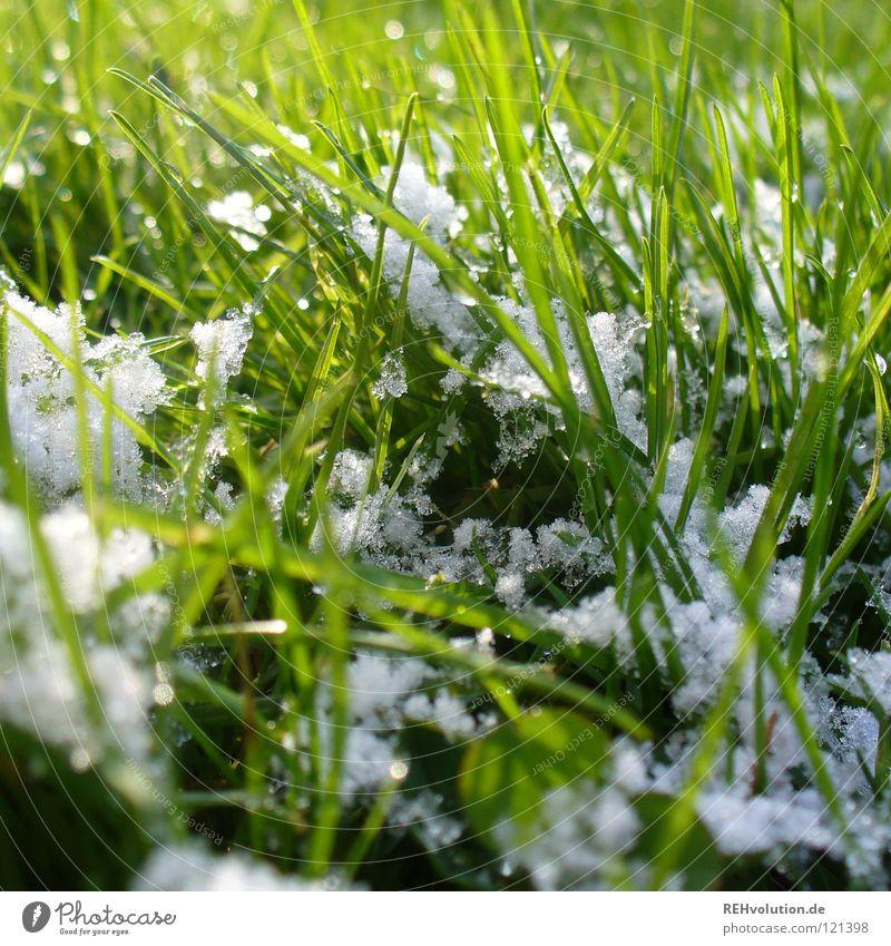 etwas schnee ... weiß grün Winter kalt Schnee Wiese Gras Frühling hell nass Rasen Freundlichkeit feucht Halm Schneeflocke Übergang