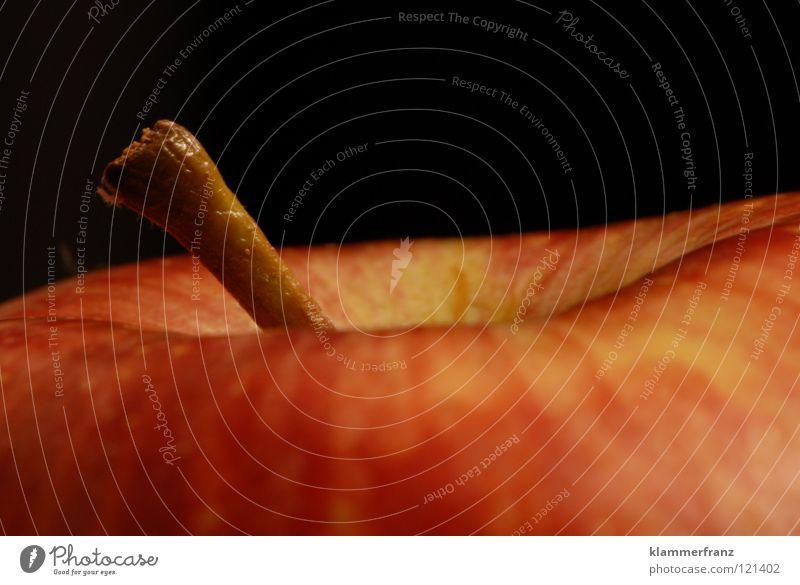 Der Apfel Ernährung Leben Gesundheit Frucht Gastronomie Stengel Vitamin