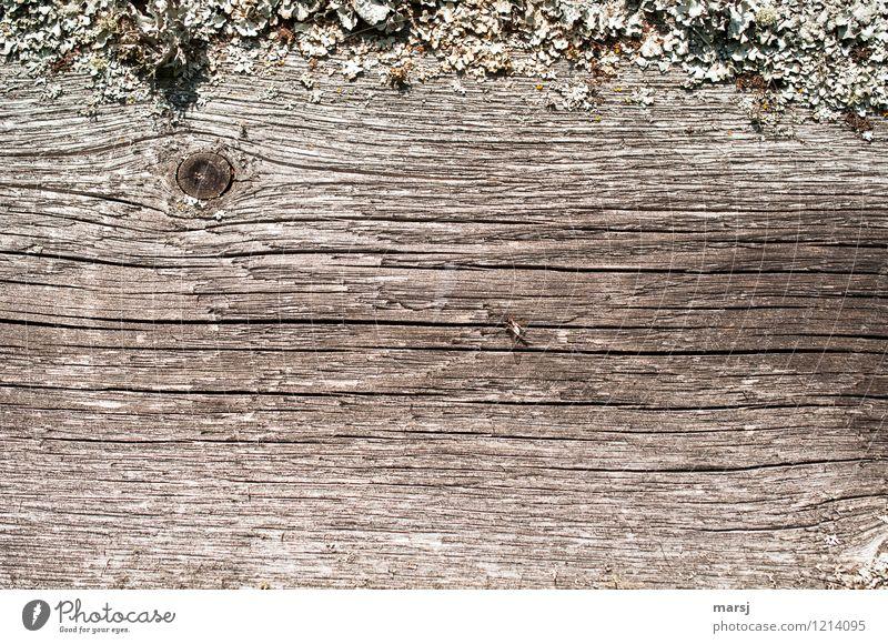 Ja, da sitzt ein Insekt Pflanze Moos Flechten Holz alt braun Astloch Zaunbrett verwittert Patina Rahmen Spuren Hintergrundbild abgelebt Farbfoto Gedeckte Farben