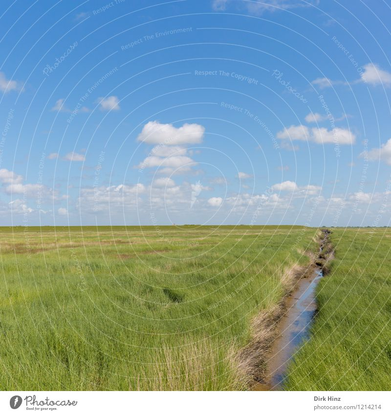 Westerhever / Nordseeküste Umwelt Natur Landschaft Pflanze Wasser Wolken Horizont Frühling Sommer Klima Schönes Wetter Küste Moor Sumpf Menschenleer blau grün