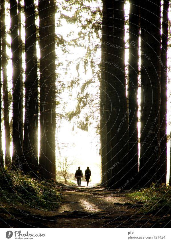 hänsel und gretel Mensch Natur Baum Wald dunkel sprechen Wege & Pfade Freiheit gehen hell Paar 2 Zusammensein offen laufen Klima