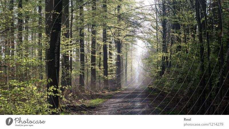 Waldweg wandern Spazierweg Natur Landschaft Frühling Sommer Schönes Wetter Pflanze Baum Wildpflanze Buche Buchenwald grün Frühlingsgefühle Heimweh Forstweg