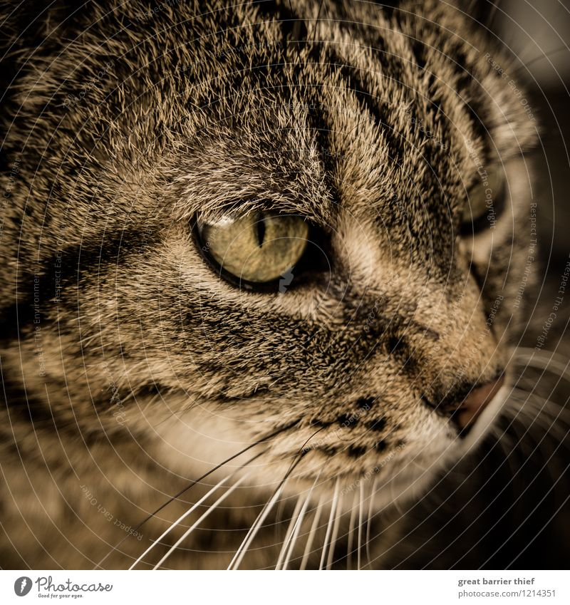 Wen oder was hat diese Katze im Auge? Tier Haustier Fell 1 beobachten Blick braun gelb schwarz Katzenauge Katzenkopf Wachsamkeit schön Farbfoto mehrfarbig