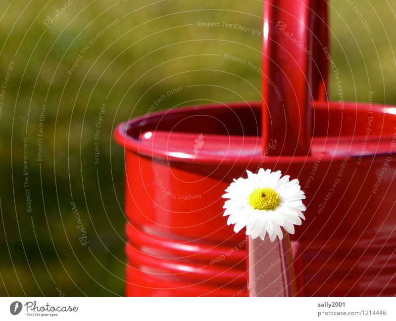 und immer fleißig gießen...! Blume Gänseblümchen Garten Gießkanne Blühend verblüht Freundlichkeit Fröhlichkeit frisch rot Freude Frühlingsgefühle Sommer