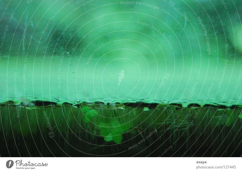 Grenze Wasser grün ruhig Frühling geheimnisvoll Urwald tief Teich trüb Algen Blubbern Klee
