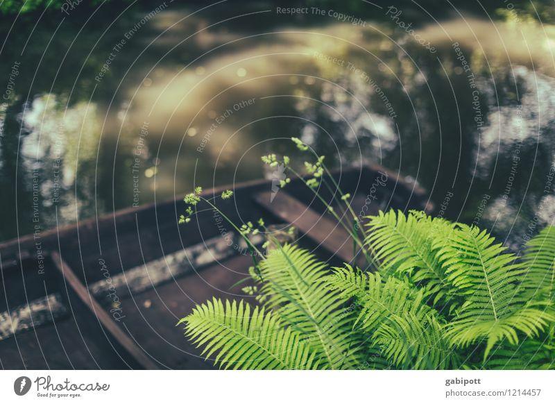 Spreedorado - KahnFarn Natur Landschaft Pflanze Tier Urelemente Sommer Schönes Wetter Blatt Blüte Grünpflanze Wald Moor Sumpf Spreewald braun grün Flussufer