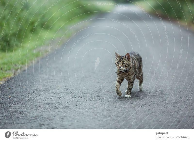 Streuner | Spreedorado elegant Ferien & Urlaub & Reisen Abenteuer Ferne Freiheit Natur Landschaft Sommer Tier Katze 1 Lebensfreude Wege & Pfade Straße Asphalt