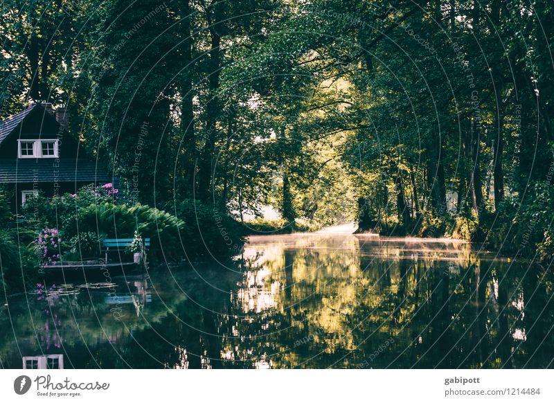 Auenland | Spreedorado Umwelt Natur Landschaft Wasser Sommer Schönes Wetter Baum Wald Flussufer Bach Spreewald Brandenburg Europa saftig grün Leben