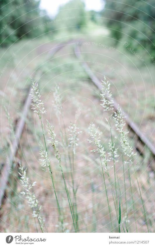 Historisch - Abstellgleis Natur alt Pflanze grün Landschaft Umwelt Gras hell Wachstum Verkehr frisch Blühend verfallen Gleise Verkehrswege Unbewohnt