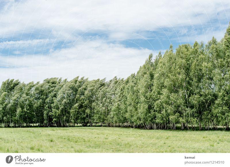 Spreedorado | Birkenhain Freiheit Umwelt Natur Landschaft Himmel Wolken Sonnenlicht Sommer Schönes Wetter Wind Baum Birkenwald Wiese Wald blau grün Kraft