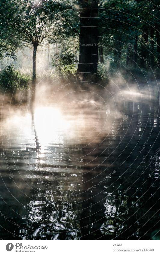 Spreedorado | Morgennebel Ferien & Urlaub & Reisen Tourismus Ausflug Abenteuer Spreewald Bootstour Kahnfahrt Umwelt Natur Landschaft Pflanze Sonne Sonnenlicht