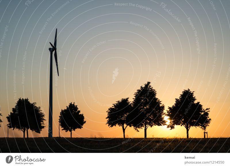 Spreedorado | Baumarten Technik & Technologie Energiewirtschaft Erneuerbare Energie Windkraftanlage Umwelt Natur Landschaft Pflanze Himmel Wolkenloser Himmel