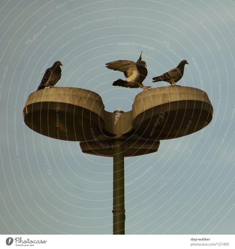 Links oder Rechts Himmel grün Wolken Tier Lampe springen Freundschaft Vogel Metall fliegen Feder Flügel Laterne Gesellschaft (Soziologie) Strommast Taube