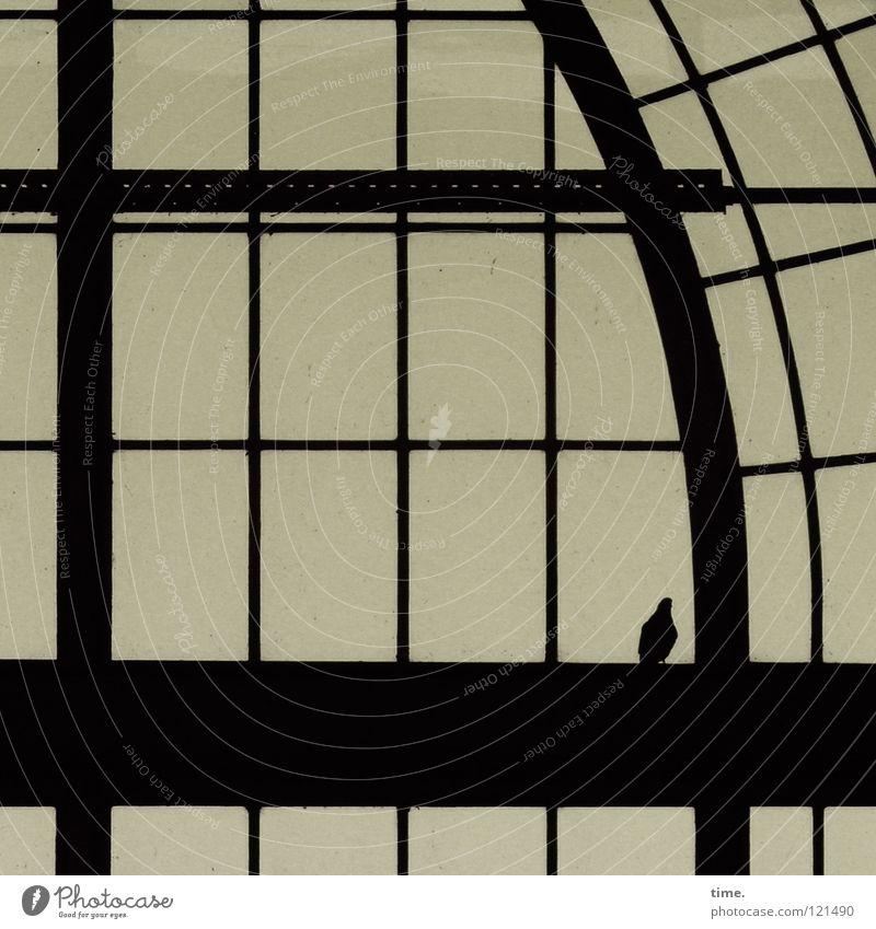 Zwischenlandung Bahnhof Dach Vogel Taube Glas Stahl sitzen rund schwarz Pause Vergänglichkeit Träger Strebe Säule Rechteck Verstrebung Halt streben Querträger