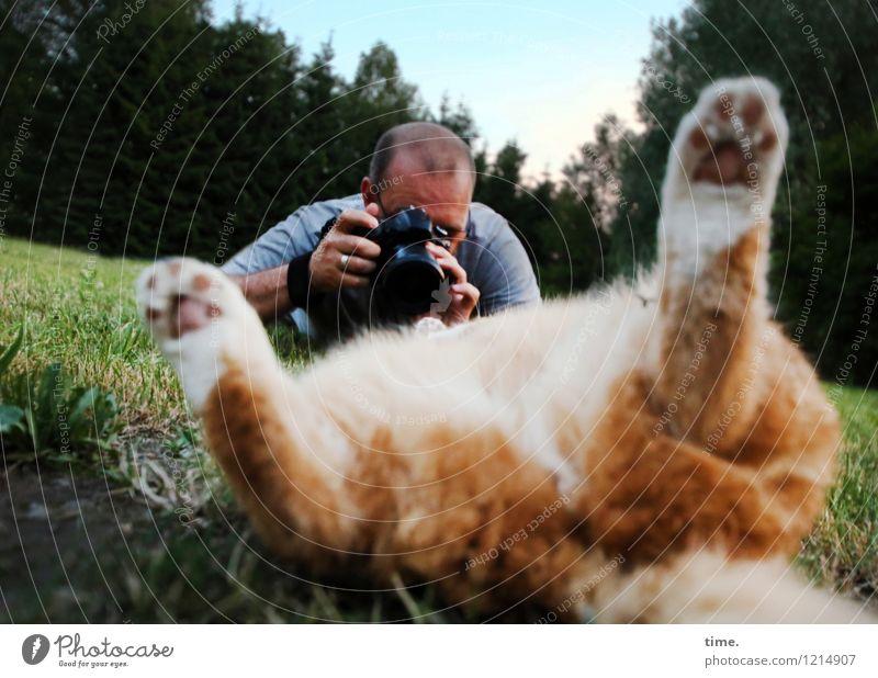 Im Rampenlicht   Model-Shooting maskulin 1 Mensch Fotografie Fotografieren Wiese Wald Haustier Katze beobachten liegen Blick Euphorie Coolness Leidenschaft