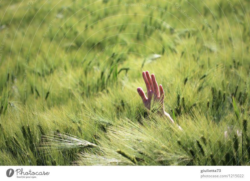 Help! Kind Hand 1 Mensch 8-13 Jahre Kindheit Natur Frühling Schönes Wetter Kornfeld Gerstenfeld Feld grün Wunde Hilfsbedürftig Erste Hilfe winken Hilfesuchend