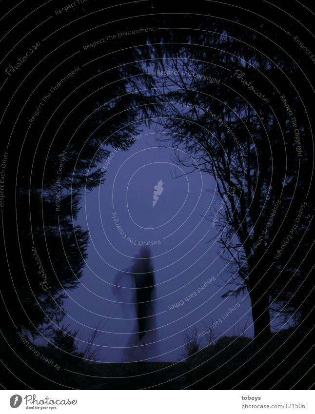 Geist Mensch Baum Wald dunkel Straße Gras Wege & Pfade fliegen Angst Luftverkehr gefährlich bedrohlich Körperhaltung Hügel verstecken Zweig