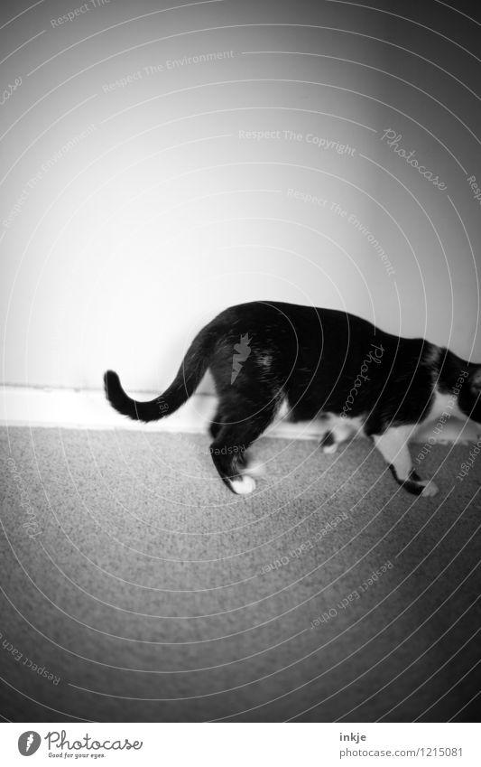 aber wenn sie nicht will... Freizeit & Hobby Haustier Katze Schwanz 1 Tier laufen Geschwindigkeit Gefühle Unlust Neigung Schwarzweißfoto Innenaufnahme